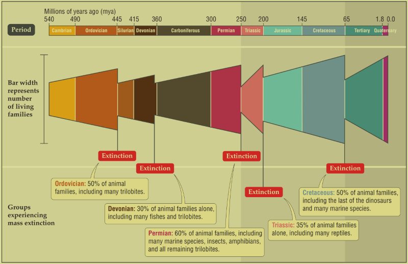 Timeline Of Mass Extinction Events On Earth